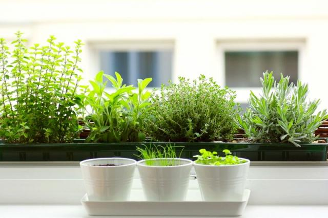 herb garden - Human Resource Support Packages